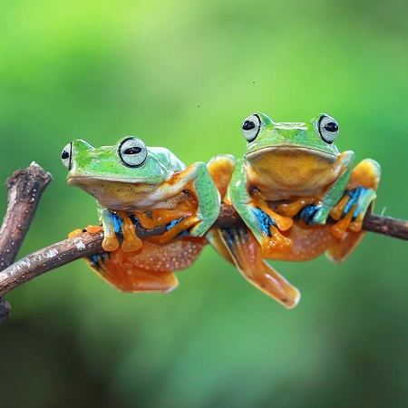 The Group Of Frogs